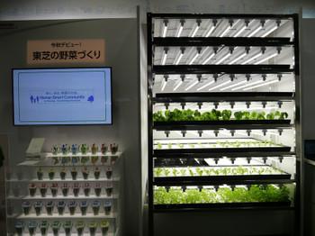 Toshiba_vegitable